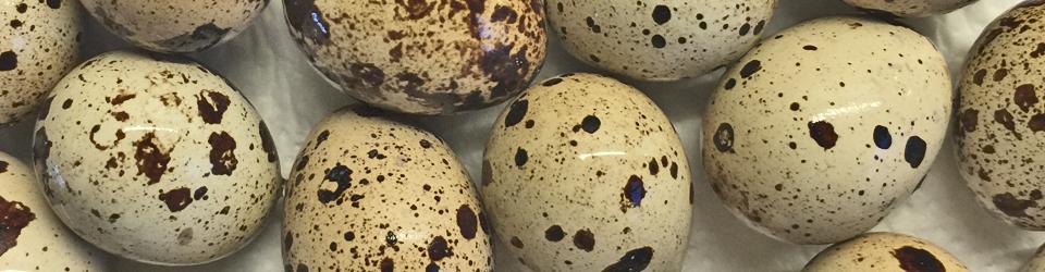 harte eier kochzeit